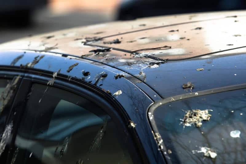 Homemade bird poop removers. How to remove bird droppings without damaging the paint.