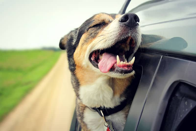 What are the causes and how to reduce wind noise in a car.