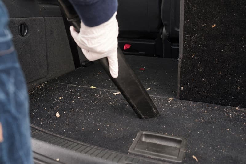 How to get rid of ants in car.